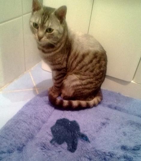 Kot Sika Poza Kuwetą Koci Detektyw